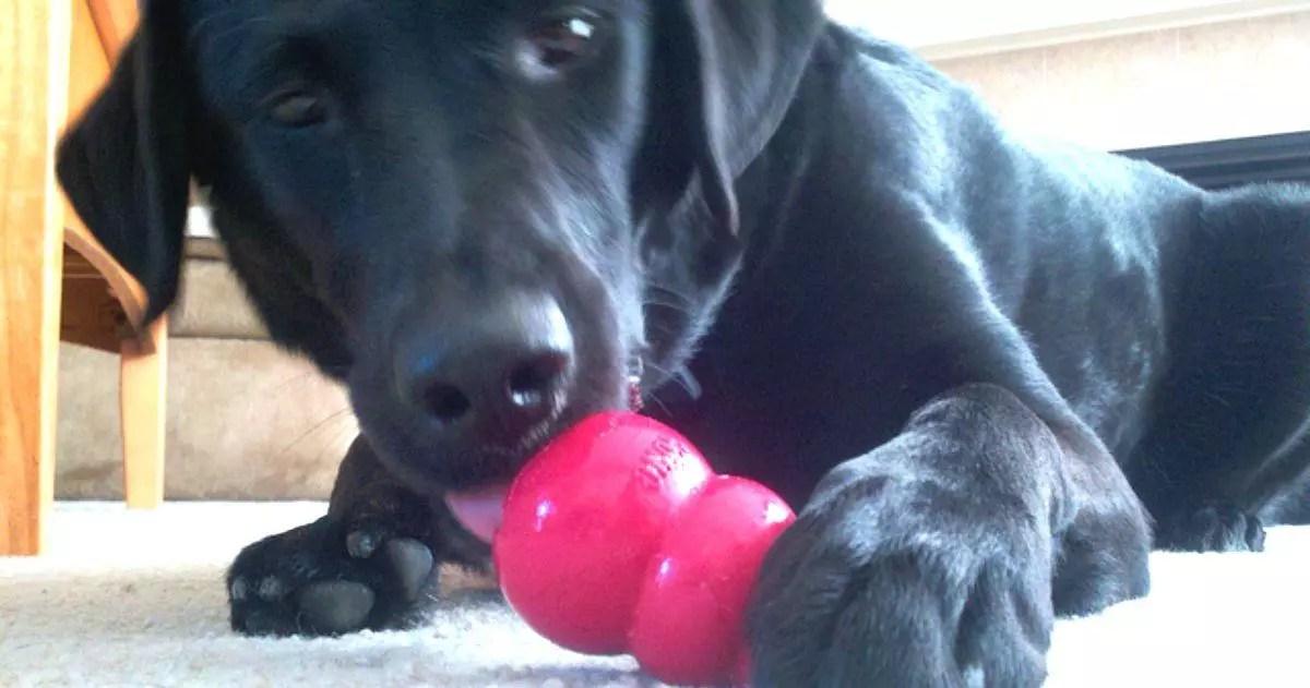 Juguetes Kong para Perros ¿Cómo usarlos correctamente?