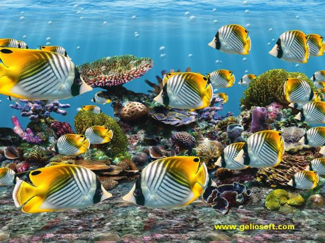 3D Screensaver and Wallpaper with Auriga Butterflyfish