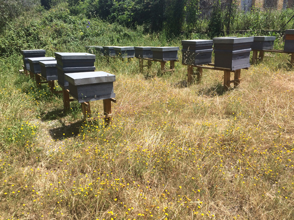place for bees1