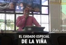 El cuidado especial de la viña - Pedro Martinez