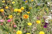 Calendule, nigelle e altri fiori