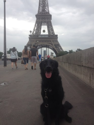 trip for dog