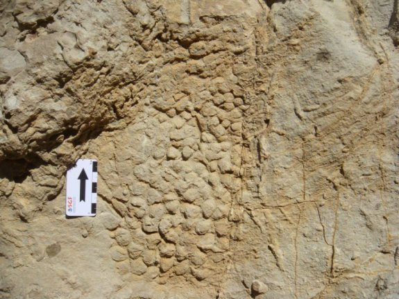 Dinosaur skin impression on rock. Credit: Víctor Fondevilla/UAB