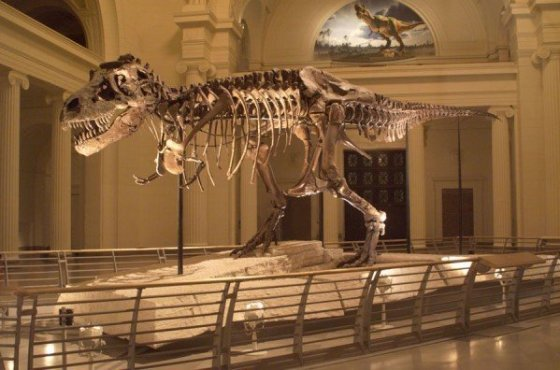 SUE the Dinosaur's forearm came to the Advanced Photon Source for its most detailed scan ever, which could shed light on why the large dinosaur had such small arms. Credit: Field Museum of Natural History