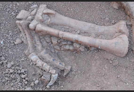 Cina: scoperto un fossile di Lufengosauro con 180 milioni di anni