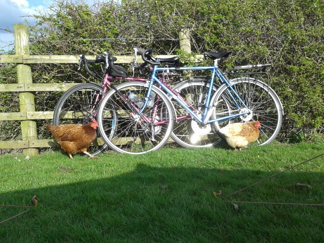 Bicycle security chickens at the first campsite