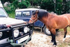 Mein Pferdefreund