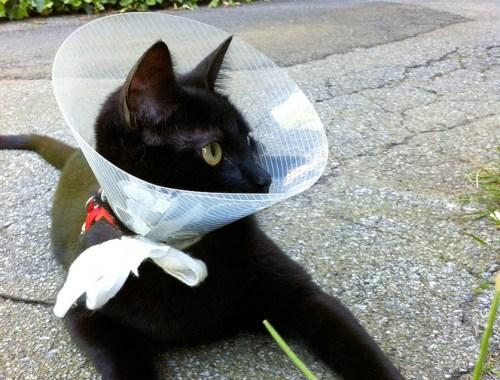 coney-cat