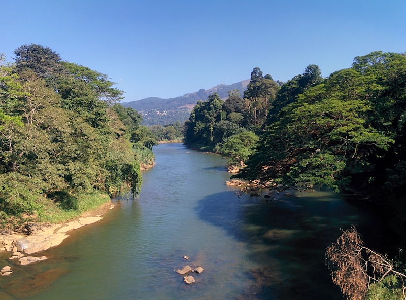 The Botanic Gardens in Kandy
