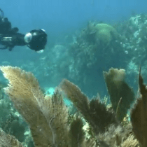 Mapping coral reefs