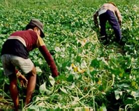 crop management