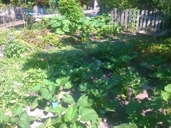 les courgettes poussent a meolans