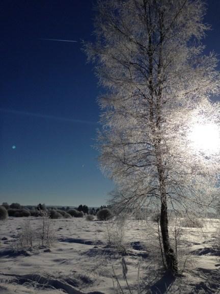 fagnes neige hiver(4)