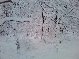 ski-fond-hautes-fagnes-00006