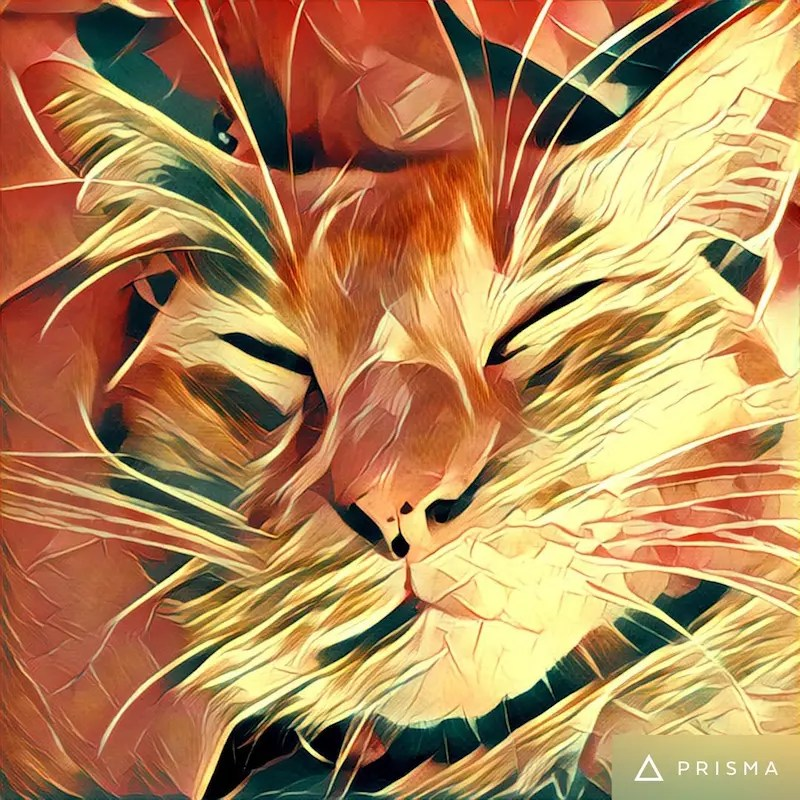 The Prisma app is now available on Android