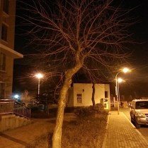 Tree at night 2