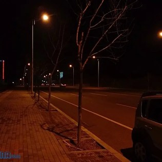 Trees on road at night