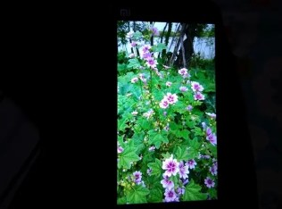 First Xiaomi Mi3 photo sample and possible 1080 screen photos