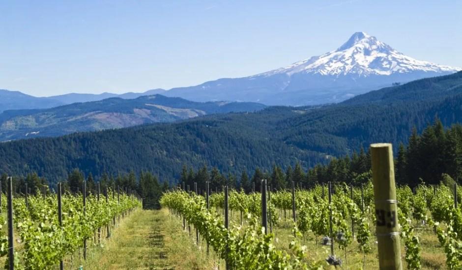 Oregon-Willamette-Valley-Bike-Tour-9-1