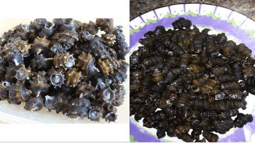 Tips: How To Properly Wash Shelled periwinkles