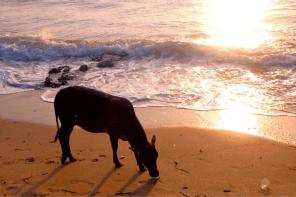 Goa beach guide: the best beaches in Goa