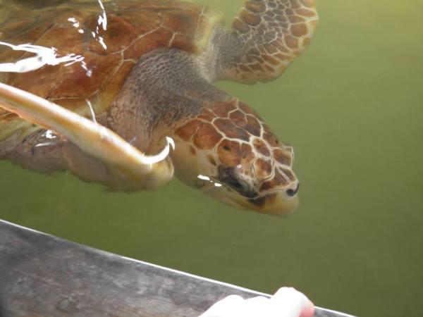 Turtle conservation in Sri Lanka
