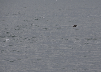 A sea lion chasing our boat