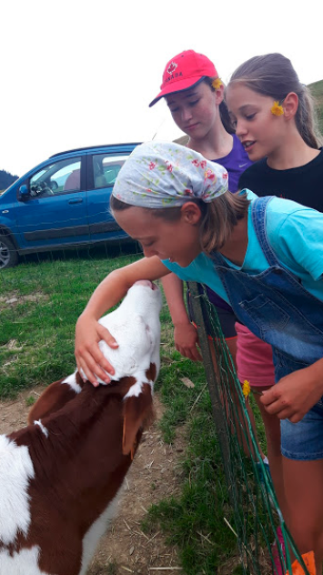 Petting the baby cows
