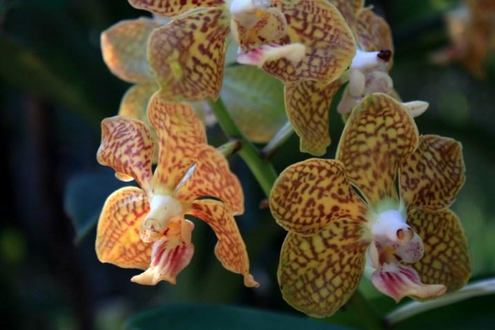 ferme orchidee - trek - chiang mai