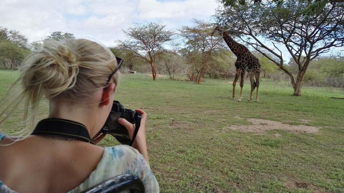 Giraffe Afrika