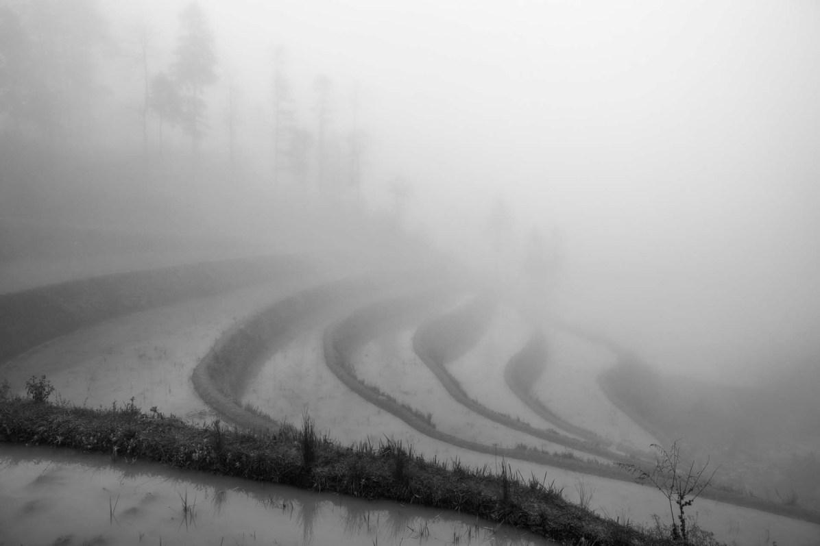 Dichter Nebel, nur die Umrisse der Reisterrassen sind zu sehen - © Nico Schaerer, nuvu.ch