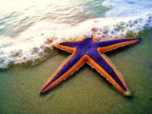 Starfish, Celiac, and Once upon a time… Be Part of the Solution