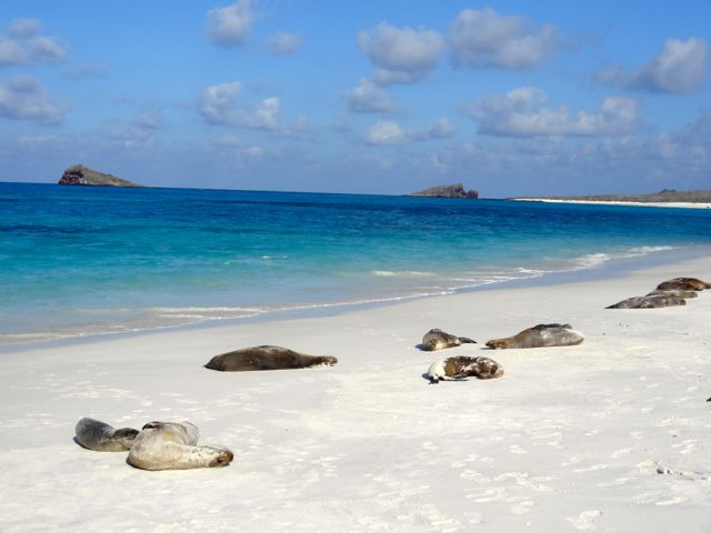 sea lions in the Galapagos beach