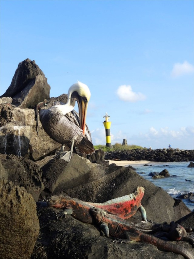 wildlife in the Galapagos Islands