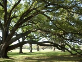 Audubon Park is one of GoNOLA's Top 5 places for a picnic in New Orleans