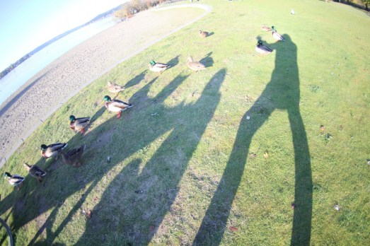 Duck Picnic Shadow Play
