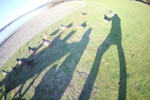 Duck Picnic Shadow Play