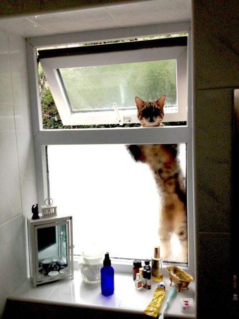 rama cat burlger