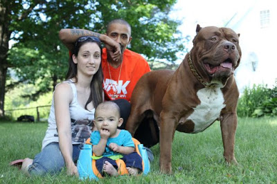 giant-pit-bull-hulk-the-newborn-baby-3
