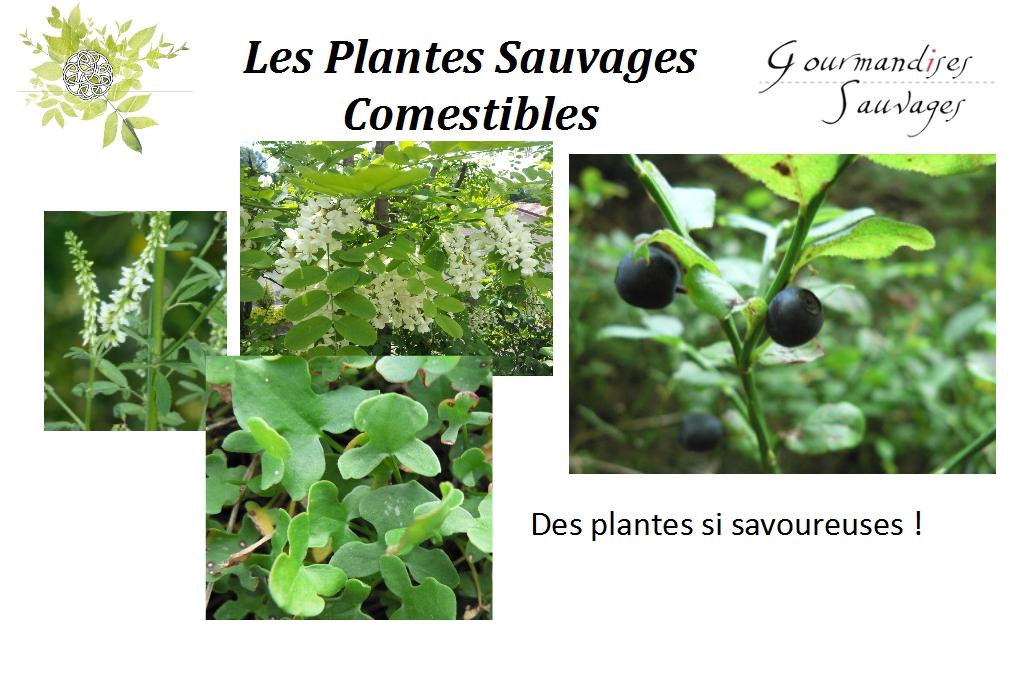Lancement 2 formation plantes sauvages comestibles en for Vers dans les plantes