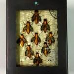 Bees Box