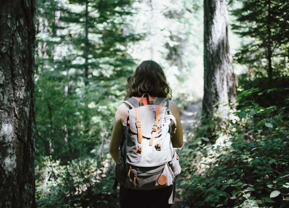 Walking in Woods Health Benefits of Trees
