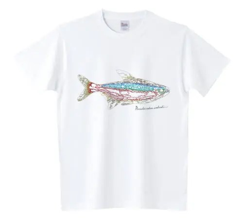 カージナルテトラ Tシャツ
