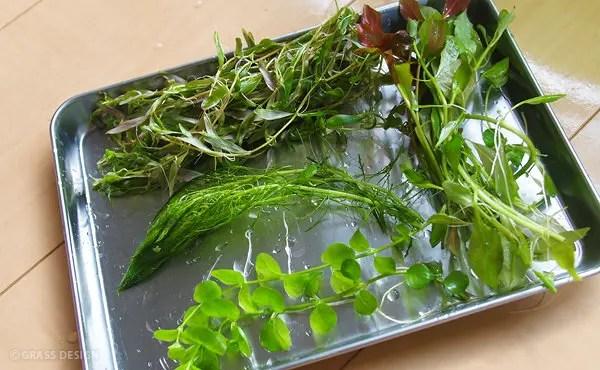 トリミングした有茎草を整理