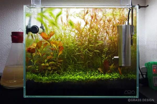 グラミー水槽の水草の様子