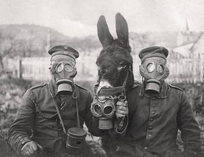 ezel met gasmasker, Duitse soldaten, 1917 foto via link