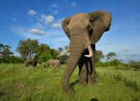 8 things you didn't know about elephants