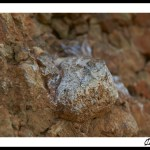 espagne-coll-de-nargo-ivan-olivier-photographie-16