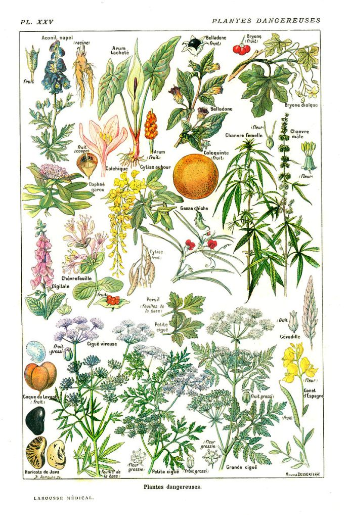 GC-Larousse médical illustré wiki