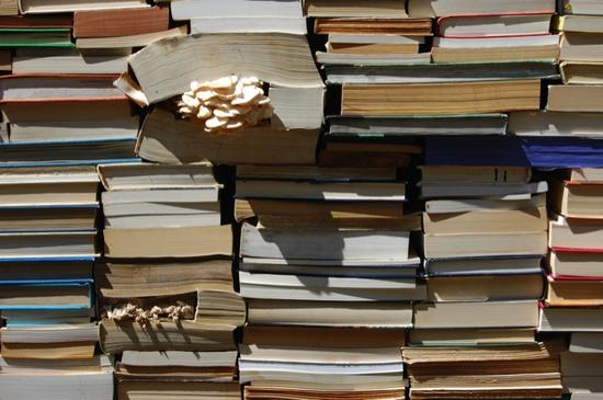 jardin de la connaissance book installation 10